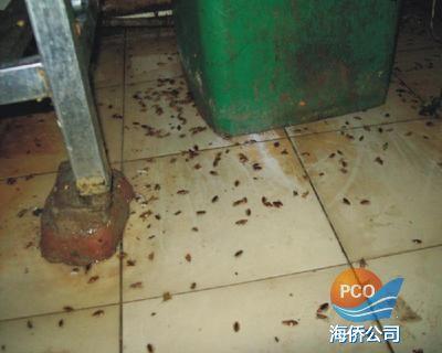 灭蟑螂防治效果