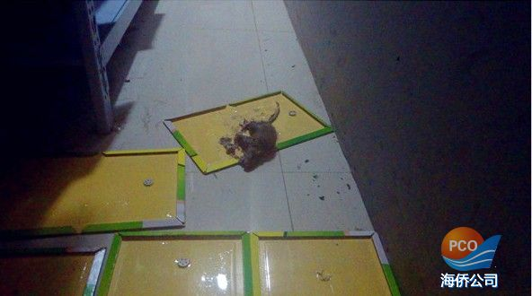 唐山海侨灭鼠现场